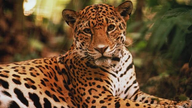 Senderos Del Jaguar Bahia Tours